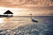 tropical beach: flamingo at the dawn. Dramatic sky poster