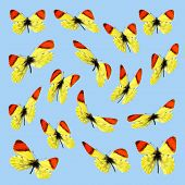 Takeoff of 16 Moroccos orange butterflies in the blue background poster