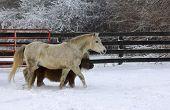 Two ponies in snowy winter farm scene. poster