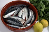 Sardines (pilchards) in a rustic bowl with their heads and innards removed and lemon and parsley beside them. Sardines, are high in Omega-3 oils and Vitamin D poster
