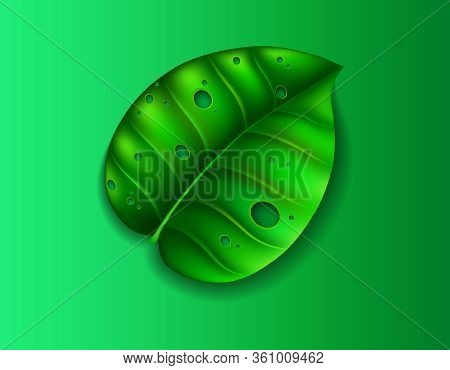 Green Leaf With Holes And Shadow Cut Out Of Paper Style On Green Background.
