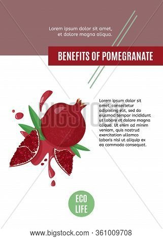 Hand Drawn Pomegranate On White Background. Vector Design Template For Article Or Web Banner Of Frui