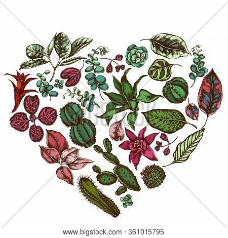 Heart Floral Design With Colored Ficus, Iresine, Kalanchoe, Calathea, Guzmania, Cactus Stock Illustr