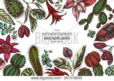 Floral Design With Colored Ficus, Iresine, Kalanchoe, Calathea, Guzmania, Cactus Stock Illustration