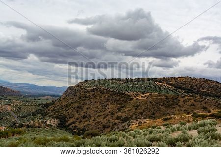 Andalusian Landscape With Yellow Hills And Green Olive Trees Plantations, Spain