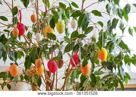 Colorful Eggs Decorating An Ornamental Ficus Benjamina 'exotica' Indoor Plant, For The Easter Holida