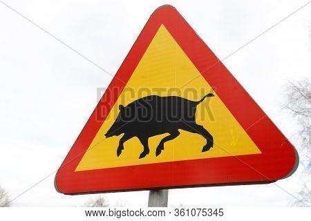 Close Up Of A Swedish Wild Boar Warning Road Sign.