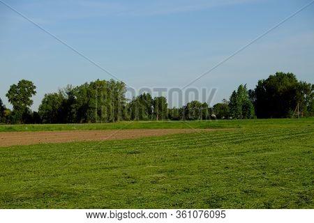 Rows Of Freshly Cut Field Grass. Haymaking. Rural Landscape.