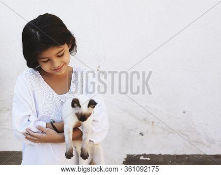 Happy Girl Hugging Lovely Kitten. Cute 12 Years Kid Girl Holding A Beautiful Siamese Cat. Hispanic B