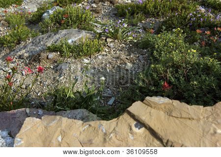 Wild flowers on a slope