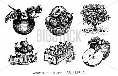 Apples In A Basket, Apples In A Box, Apple On A Twig , Half An Apple, An Apple With A Leaf, Appletre