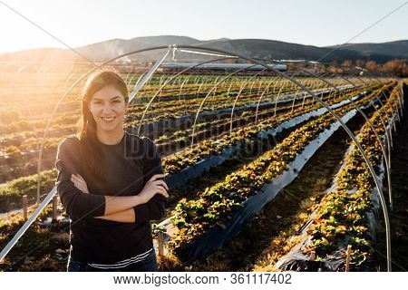 Woman Farmer Agronomist Inspecting Strawberry Crops Growing In The Fruit Farm Field.nature Lover.sus