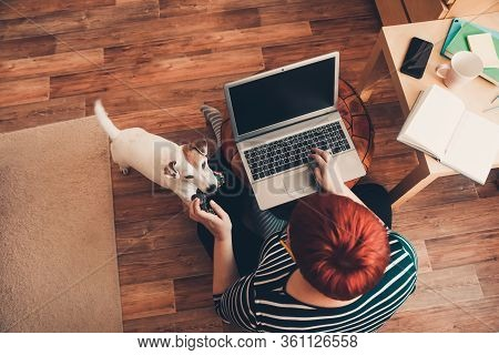 Home Office, A Woman Works Online Using Laptop Computer, The Dog Interferes. Stay Home, Work Online,