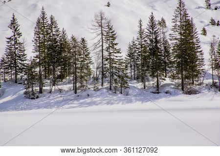 Pine Forest In The Snows Of Lake Braies In The Dolomites Near Dobbiaco, Italy