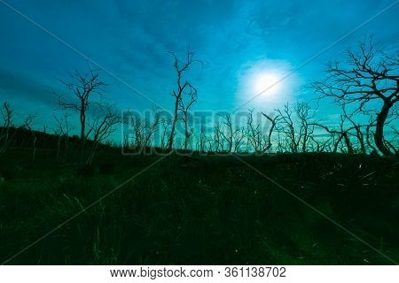 Dead Gum Trees Silhouetted And Back-lit By Sun Filtered By Light Cloud In Forest Of Bare  Dead Wrigg