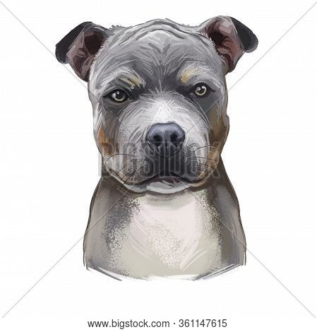 American Staffordshire Terrier Puppy Isolated Hand Drawn Digital Art Illustration. Amstaff Medium-si