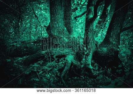 Mystical Horror Scary Abstract Forest To Halloween. Clumsy Dirty Texture Of The Roots Of A Tree With