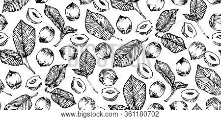Hand Drawn Hazelnuts Seamless Vector Illustration, Black Ink Drawing Sketch Pattern On White Backgro
