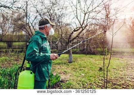 Farmer Spraying Tree With Manual Pesticide Sprayer Against Insects In Spring Garden. Agriculture And