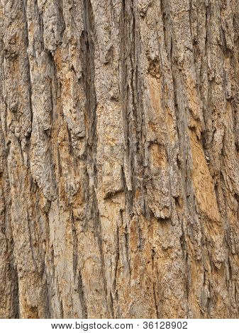 Red Tree Bark, close up