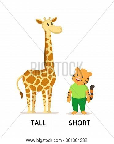 Words Tall And Short Flashcard With Cartoon Animal Characters. Opposite Adjectives Explanation Card.