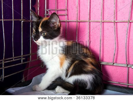 Lonely Homeless Kitten in a Cage in the Animal Shelter poster