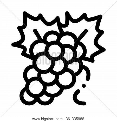 Bunch Of Grapes Icon Vector. Bunch Of Grapes Sign. Isolated Contour Symbol Illustration