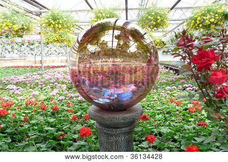 gazing ball reflection in a greenhouse