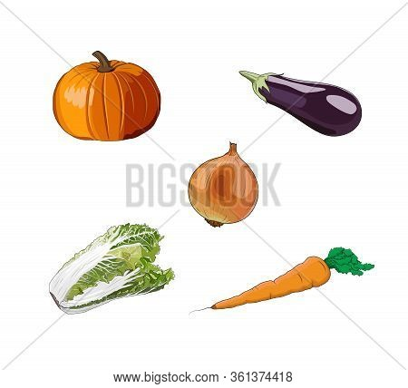 Vegetables Set: Pumpkin, Eggplant, Onion, Carrot, Salad, Lettuce. Farm Food. Healthy Diet. Fresh Raw