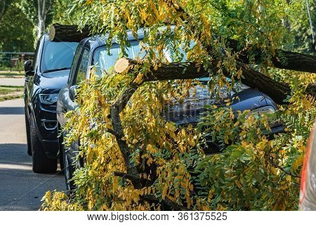 A Very Large Broken Tree Fell On A Car During A Hurricane. Destruction After A Gale. Accident. Close
