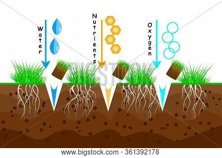 Lawn Aeration. Lawn Grass Care Service, Gardening And Landscape Design. Waste Of Aeration Technique