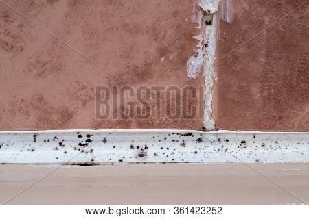 Black Mold Fungus Growing Damp Poorly Ventilated Bath Areas, Mold Tile Joints With Condensation Mois