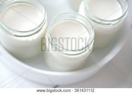 Homemade Organic Yogurt In Glass Jars In Yogurt Maker. Automatic Yogurt Machine To Make Fermrnted Mi