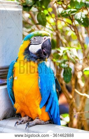 Blue-and-yellow Macaw Parrot On Sale At The Yuen Po Street Bird Garden In Kowloon, Hong Kong. The Pu