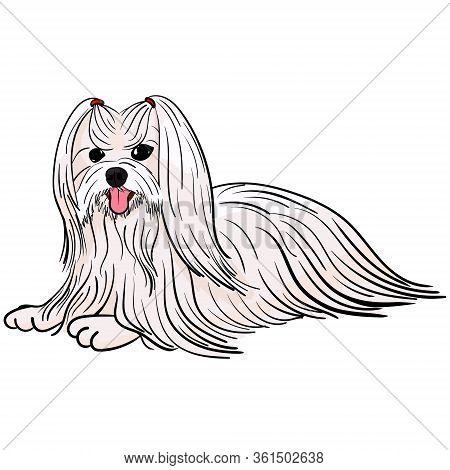 Cartoon White Lapdog. Illustration Of A Small Purebred Dog Maltese Or Bichon Isolated On White