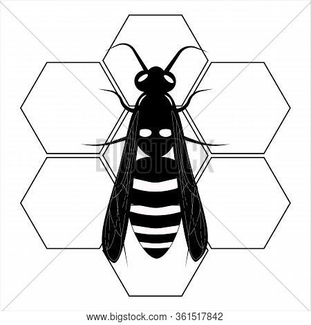 Wasp. Honey Bee. Botany Illustration. Insect Animal, Exotic. Vector Isolated On White Backdrop. Hone