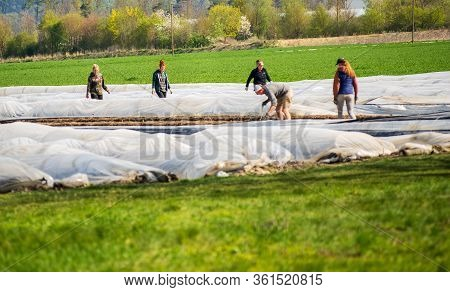 Altötting,germany-april 15,2020: Migrant Workers From Eastern Europe Help During The Asparrgus Harve