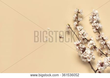 Spring Background With Beautiful White Flowering Branches. Pastel Beige Background, Bloom Delicate F