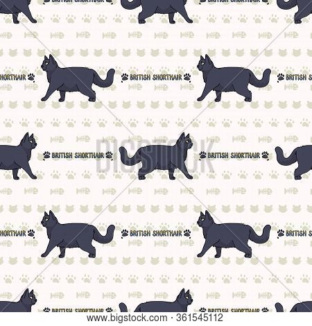 Cute Cartoon British Shorthair Cat With Text Seamless Vector Pattern. Pedigree Kitty Breed Domestic