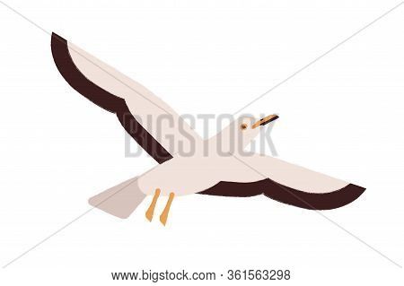 Cartoon Seagull Flying Straighten Wings Vector Flat Illustration. Colorful Atlantic Seabird Characte