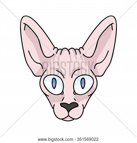 Cute Cartoon Sphynx Kitten Face Vector Clipart. Pedigree Exotic Kitty Breed For Cat Lovers. Purebred