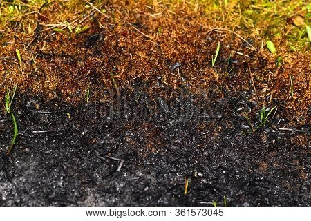Edge Of Burnt Ground And Fresh Grass. Ashy Background.