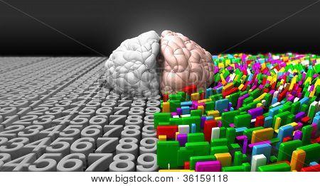 Cérebro esquerdo & cérebro direito