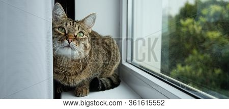A Cat With Green Eyes Looks Interested Window Tree Window Sill Curtain Banner