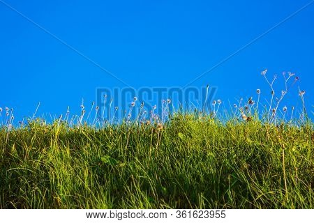 The slope of the ravine, overgrown with grass. Photo taken from the bottom of the ravine