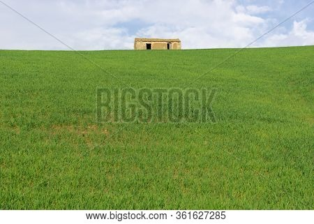 green wheat with abandoned rural house on the hill in Sicily