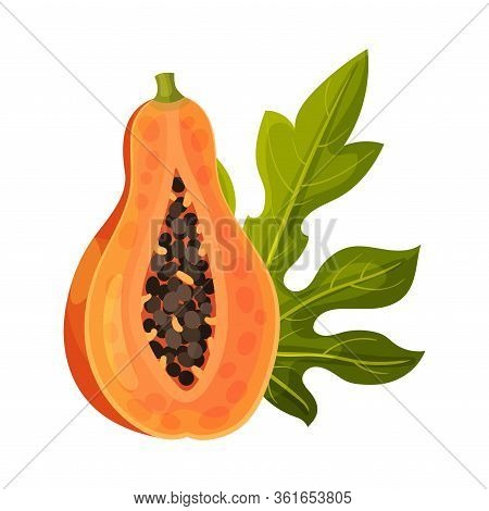 Half Of Papaya Fruit With Orange Pulp And Black Seeds Vector Illustration