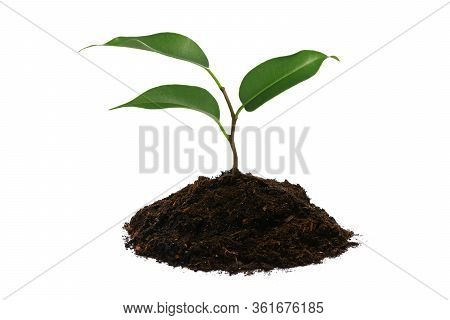 New Life Concept - Young Green Plant With Heap Of Brown Soil Isolated On A White Background In Close