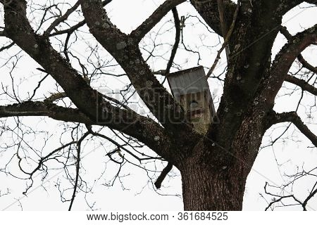Bird house on tree between thick leafless branches