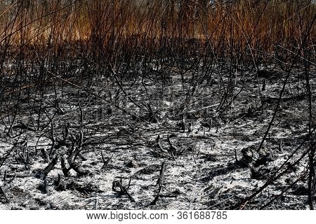 Black Surface Of The Rural Field With A Burned Grass. Effects Of Grass Fire On Soils. Charred Grass